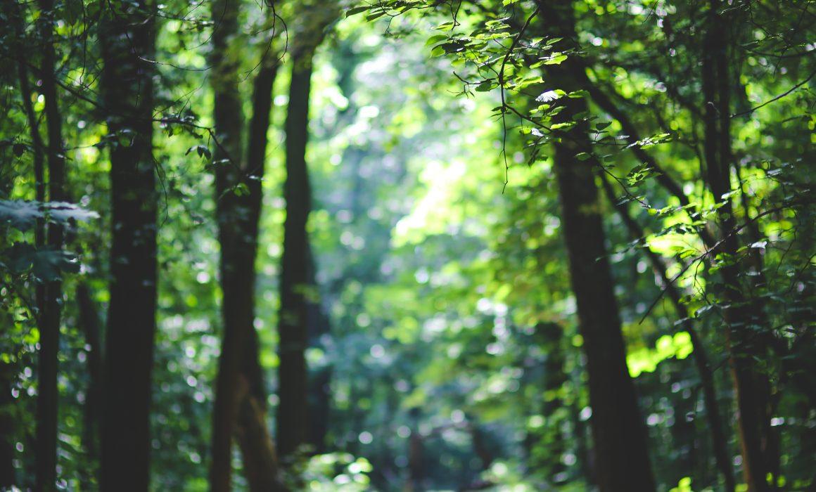 Kweken in het bos: een Brabantse boswachter vertelt